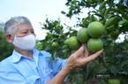 """Clip: Nguồn """"Quỹ vàng"""" giúp nông dân Hưng Yên trồng cam đặc sản thu hàng trăm triệu mỗi năm"""