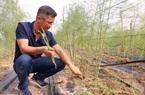 Kỹ sư công nghệ bỏ việc, trồng măng tây làm giàu