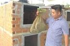 """Bình Thuận: Nuôi loài bò sát rõ dài ai trông cũng sợ, nông dân 9X làm giàu kiểu """"độc lạ"""""""