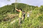 Đề phòng loài thú rừng hung dữ xuống quốc lộ tấn công người, tỉnh Quảng Trị căng lưới dài 800m, cao 6m