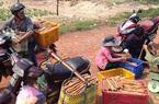 Bình Thuận: Vùng đất dân đi ngủ nhờ, sáng sớm chui vô rừng Tà Cú đào thứ củ rõ dài, ăn rất bổ