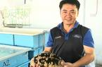 Nuôi sinh sản thành công loài hải sâm vú trắng quý hiếm to bự tại tỉnh Khánh Hoà