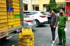 Bắt xe ô tô vận chuyển gần 10.000 con vịt giống nhập lậu