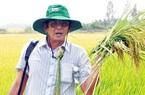 'Cha đẻ' gạo ST25 vẫn âm thầm nâng tầm gạo Việt