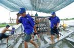Giá cá tra lao dốc, người nuôi lỗ nặng