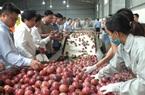 Những người viết nên kỳ tích đưa nông sản xuất ngoại