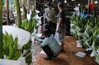 Quảng Ngãi phát triển nông nghiệp theo hướng sản xuất hàng hóa