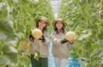 """Gái xinh Hưng Yên bắt dưa lưới """"đẻ sòn sòn"""", trái nào cũng tròn và đầy, thu lãi hơn nửa tỷ đồng/năm"""