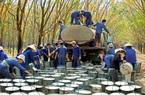 Cao su Phước Hòa sẽ đầu tư thêm 2 khu công nghiệp