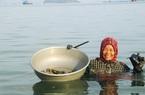 """Khánh Hòa: Ở nơi này, đàn bà con gái ra biển mò bắt những con gì mà có lần gặp """"lành ít dữ nhiều""""?"""