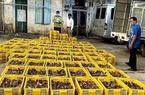 Lạng Sơn: Chặn đứng 40.000 con gia cầm giống nhập lậu từ biên giới