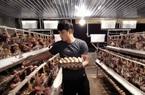 Đắk Nông: Hotboy nông dân nuôi gà gì mà mỗi tháng thu nhập 50 triệu đồng?