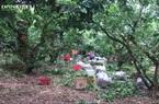 Bà Rịa – Vũng Tàu: Nhãn tụt giá thảm hại, có nhà vườn lỗ trắng, như mất chiếc xe ô tô du lịch hạng A