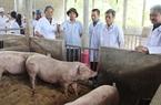 """Năm 2025 sẽ """"sạch bóng"""" dịch tả lợn châu Phi"""