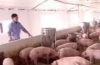 Đồng Nai: Lắp máy lạnh trong chuồng cho heo ăn, ngủ, 2 ông nông dân này làm giàu nhàn tênh
