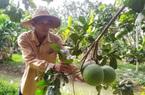 """Bình Dương: """"Bà đỡ"""" giúp nông dân vươn lên làm giàu"""