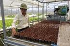 Hà Lan hỗ trợ Đà Nẵng phát triển nông nghiệp công nghệ cao