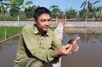 Thái Bình: Nuôi loài ba ba gai con to như cái quạt mo, ông nông dân thành tỷ phú