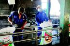 Phân bón Đồng Phú chinh phục nhà nông bằng chất lượng, vụ mùa bội thu