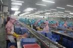 ĐBSCL: Vì sao giá cá tra lại tăng mạnh?