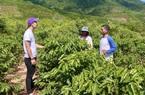 Bài 4: Công nghệ sẽ giải quyết bài toán khó về bảo hiểm nông nghiệp tại Việt Nam?