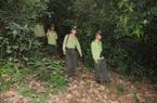 Quỹ Bảo vệ và phát triển rừng Quảng Nam - Vượt khó để hoàn thành nhiệm vụ