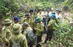 Sau 30 năm, tỷ lệ che phủ rừng của Việt Nam tăng lên bao nhiêu?