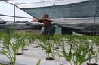Thêm 78 doanh nghiệp đầu tư vào nông nghiệp, nông thôn tại Quảng Nam