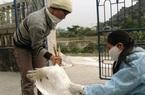 154 nhân viên thú y sắp mất việc, 26 người từng thuộc Chi cục Chăn nuôi và Thú y Hà Nội