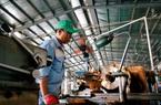 """Chuyên gia UBS: Kinh tế Việt Nam có """"tiềm năng to lớn"""""""