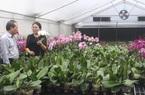 Ứng dụng công nghệ cao, bắt hoa lan nở theo ý muốn