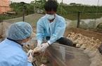 Chuyên gia khuyến cáo phương pháp phòng chống cúm gia cầm