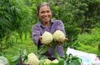 12 sản phẩm nông nghiệp nhận sao OCOP tỉnh Lạng Sơn