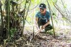 Khánh Hòa: Dân rủ nhau chui vào bụi hái thứ mầm non nhú lên từ mặt đất đem bán có thu nhập khá