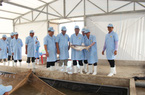 Việt Úc sớm đưa cá tra giống công nghệ cao ra thị trường