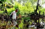 Dân thành phố về tỉnh Cà Mau lội sình bắt loài cá kỳ lạ nhất hành tinh, cặp mắt to thô lố, biết leo cây