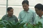 Nuôi vịt trên cát, trồng rau thủy canh nhổ lên ăn ngay được, nông dân tỉnh Khánh Hòa khá giả lên