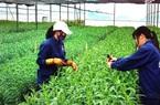 Cách nào minh bạch trong quá trình sản xuất nông sản hữu cơ