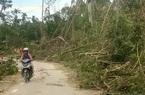 Quảng Nam: Hơn 70 nghìn ha rừng nguyên liệu bị thiệt hại do bão