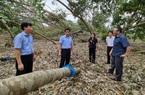 Phó Bí thư Thường trực Tỉnh ủy Quảng Nam: Nhìn cảnh nhà cửa, cây cối, trang trại hư hỏng mà đau xót