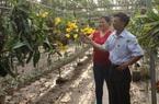 Hưng Yên: Nông dân được hưởng lợi ích thiết thực sau 10 năm thực hiện Kết luận 61 của Ban Bí thư