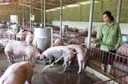 Giá nông sản hôm nay (11/12): Giá lợn hơi miền Bắc tăng thêm 2.000 đồng/kg, cà phê giảm nhẹ