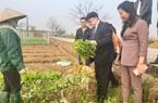 Phú Thọ: Chủ tịch Hội NDVN Thào Xuân Sùng xuống đồng, bất ngờ với cách trồng rau an toàn của nông dân