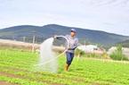 Lâm Đồng có bao nhiêu ha sản xuất nông nghiệp hữu cơ mà muốn dẫn đầu cả nước?
