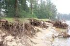 """Hà Tĩnh: Biển xâm thực, """"nuốt"""" dần rừng phòng hộ, người dân thấp thỏm lo âu"""