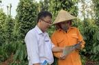 Bán nông sản tham gia BHXH tự nguyện