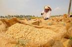 Giá nông sản hôm nay (15/12): Giá lúa gạo đứng yên, lợn hơi tiếp tục tăng