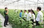 Hà Nam: Doanh nghiệp đầu tư sản xuất nông nghiệp công nghệ cao phải cam kết tuyển dụng lao động địa phương