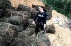 Trồng bán loại cây khô khốc mà nông dân ở đây thu gần 250 tỷ/năm