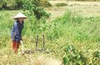 3 đối tượng được miễn thuế sử dụng đất nông nghiệp mới nhất